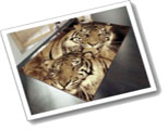 Wildlife Rugs Twin Tigers